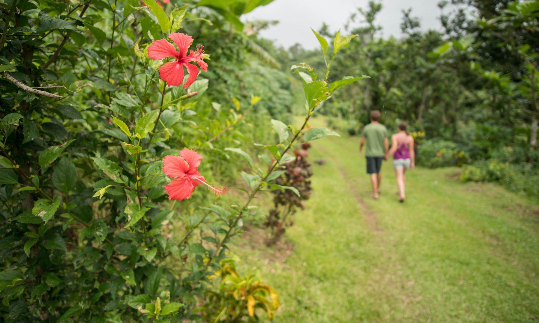 Bouma Flowers